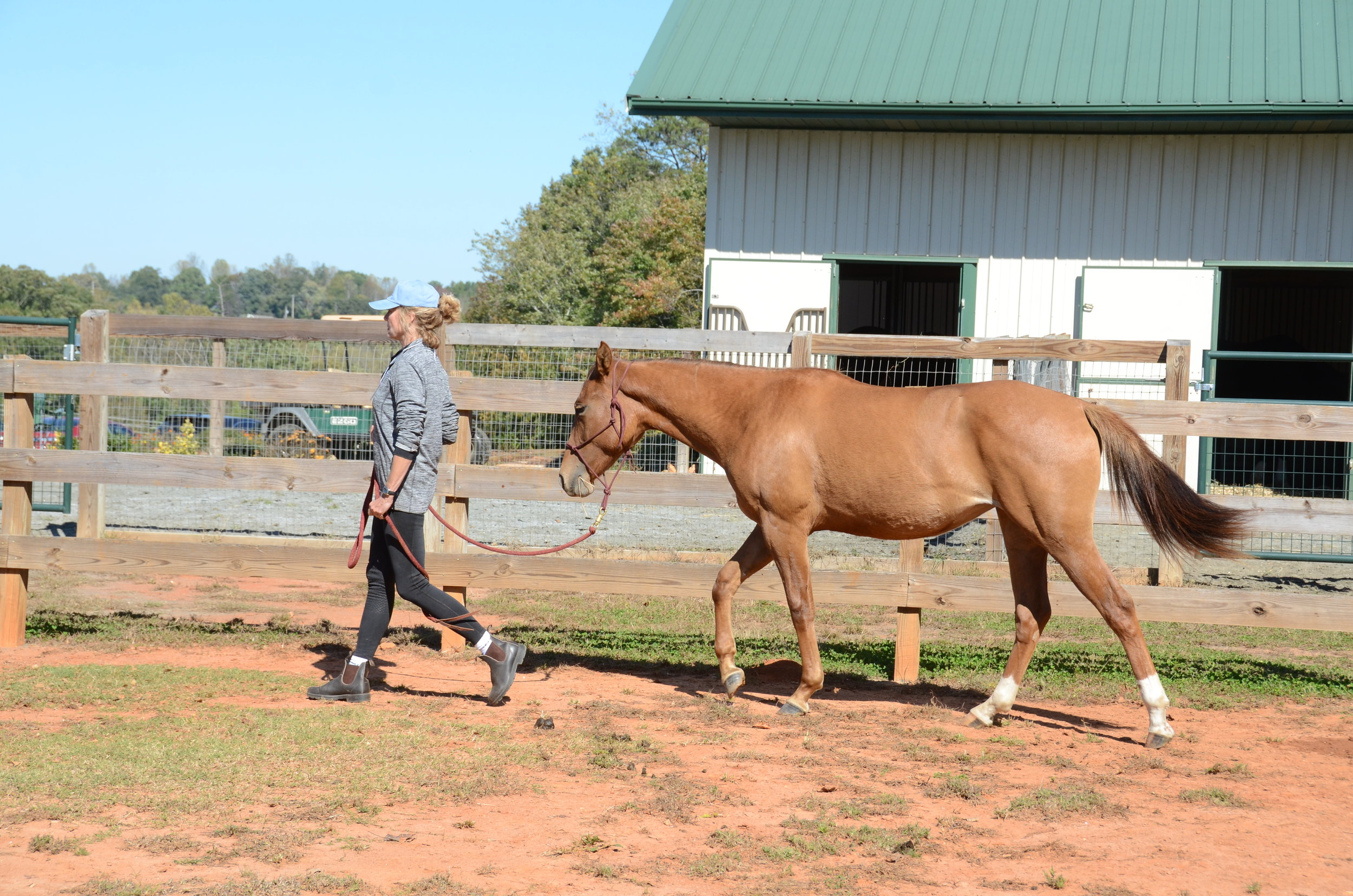 Volunteer and trainer Karen bringing baby Stuart in for Yvonne to assess.