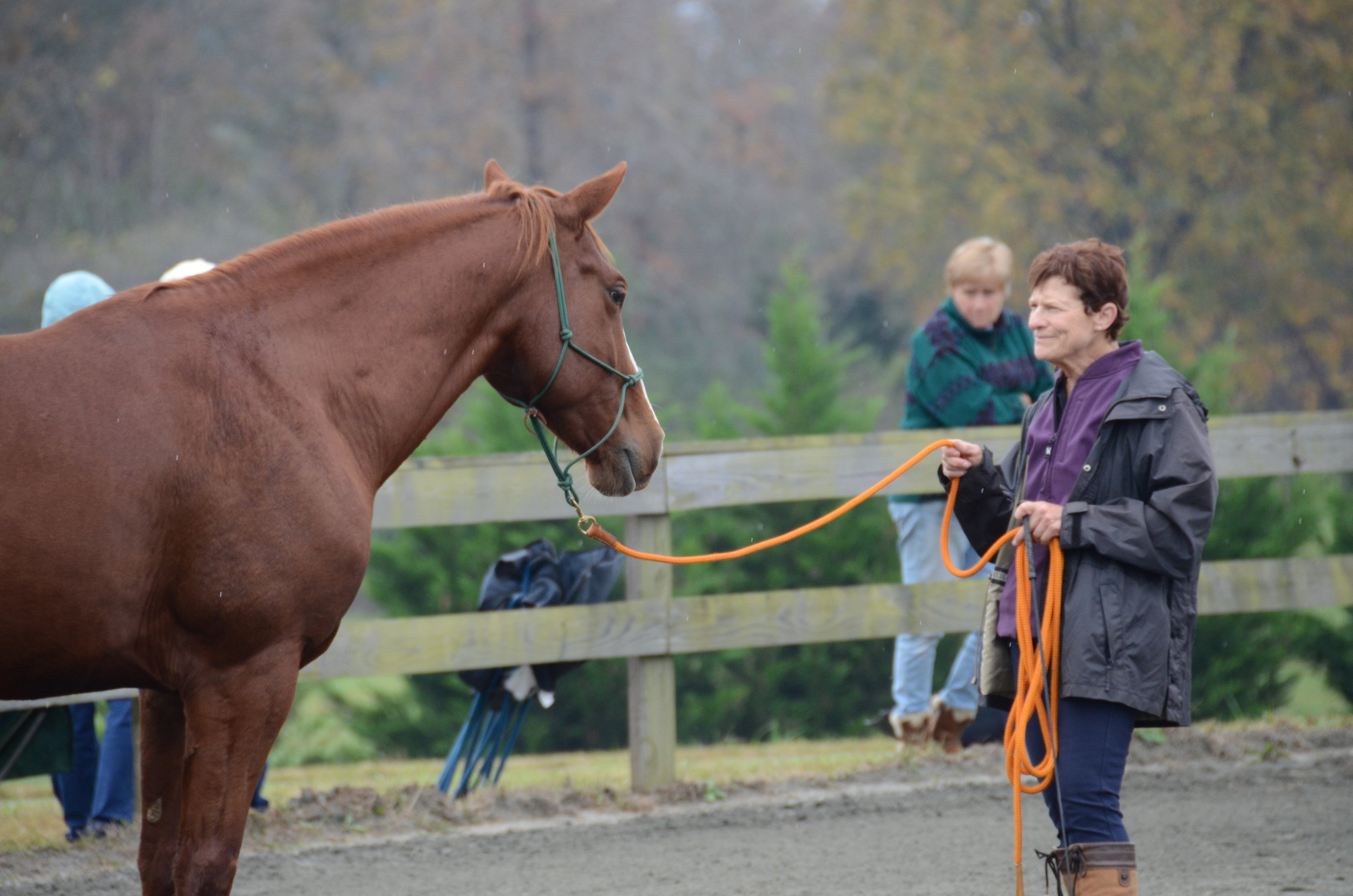 Rafee and his owner learning about backing out of her space.  Kim Barteau giving the ground control clinic.