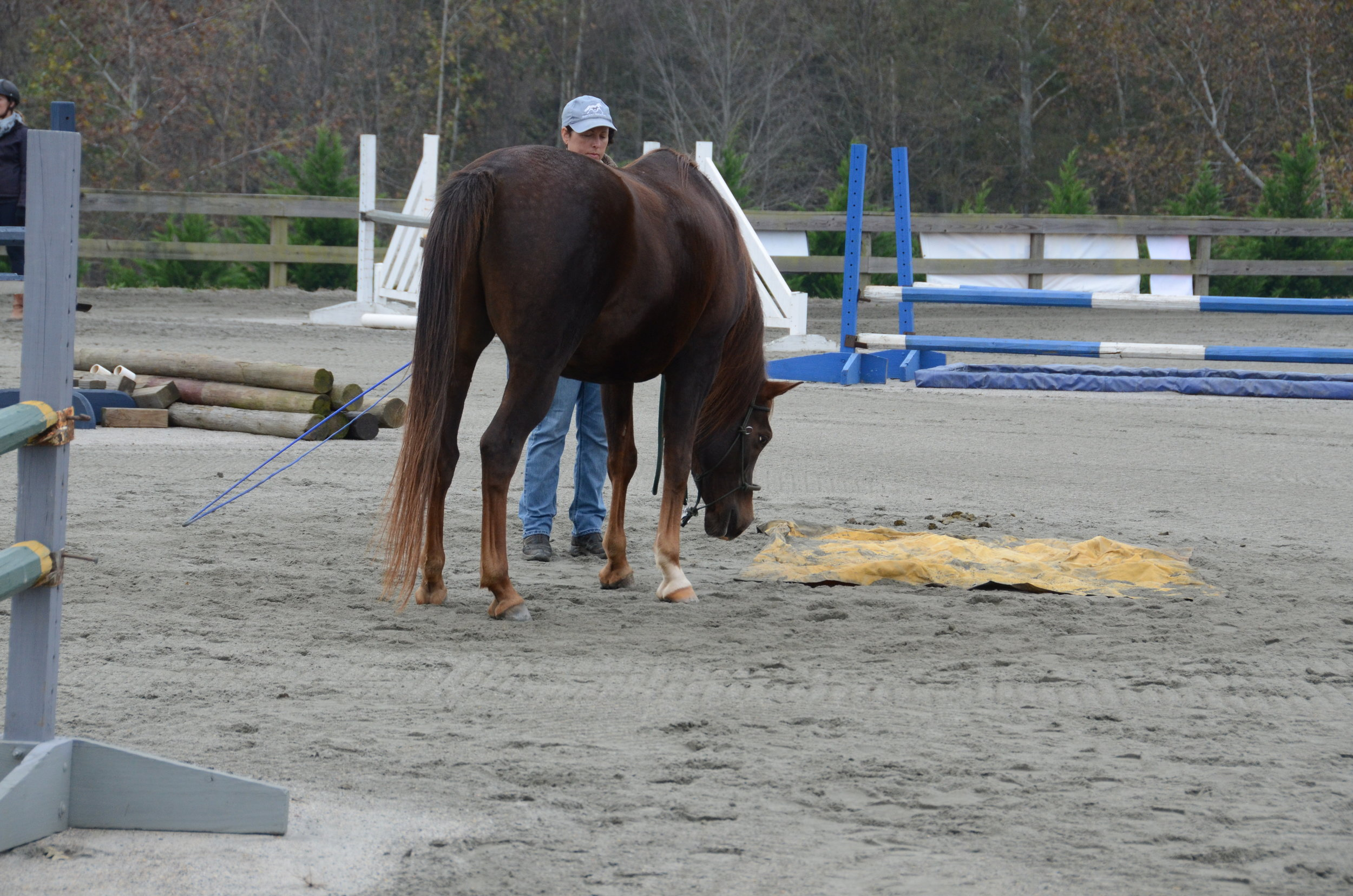 "Another really fine rescue horse that this young woman saved.  Kim Barteau was teaching how to have your horse move across a tarp.  ""Mom, that thing is going to eat me!"""