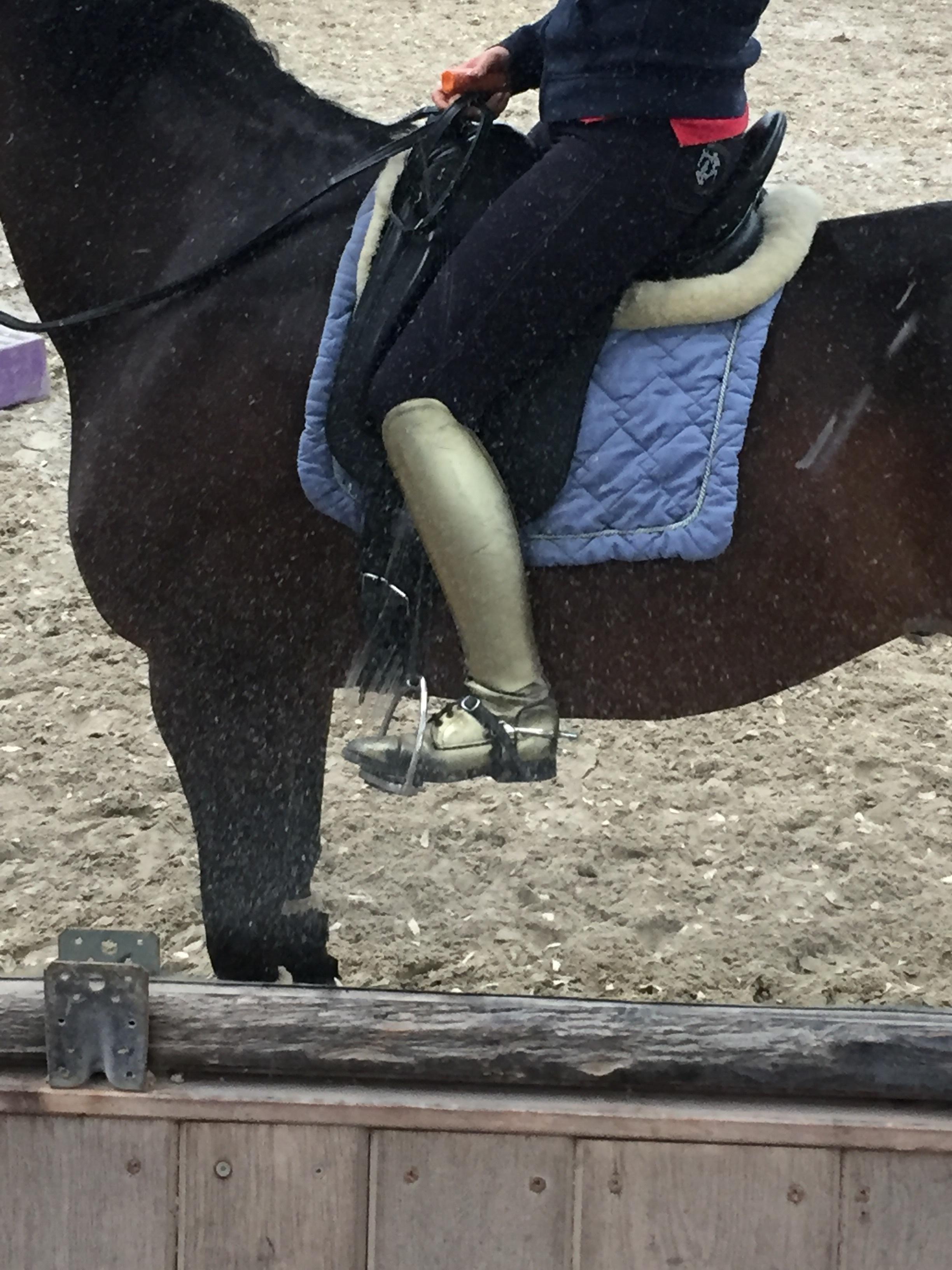 Die Flecken sind nicht auf dem Pferd ;-) Henny ist selbstverständlich geputzt... Nur der Spiegel in der Halle nach dem Turnier noch nicht !