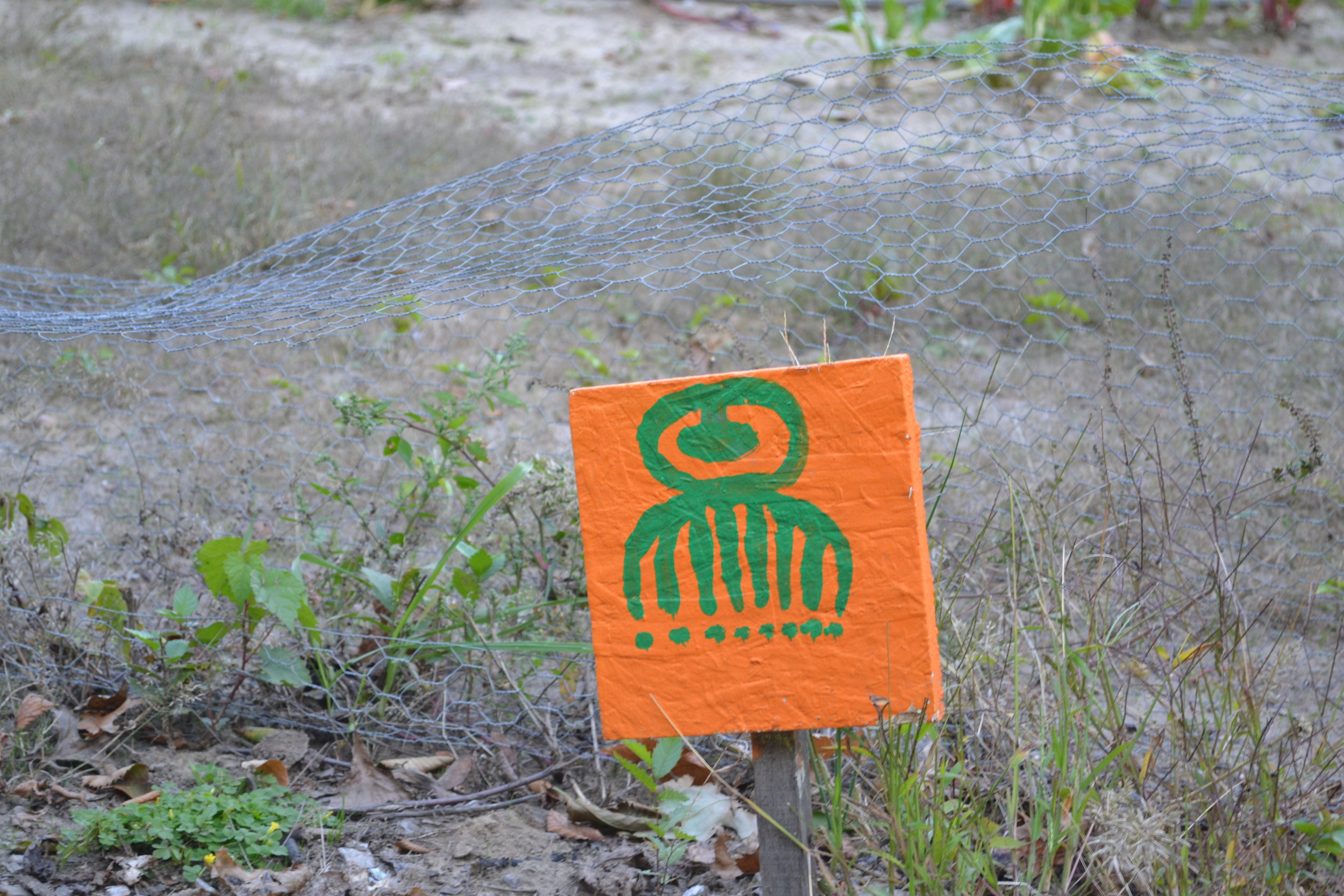 D-Town Farm row crop marker
