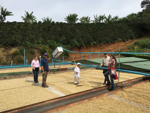 Roof Top Coffee Drying at El Zafiro