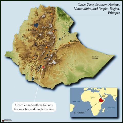 362.GedeoZoneSouthernNationsNationalitiesandPeoplesRegionEthiopia-23-480x480.jpg