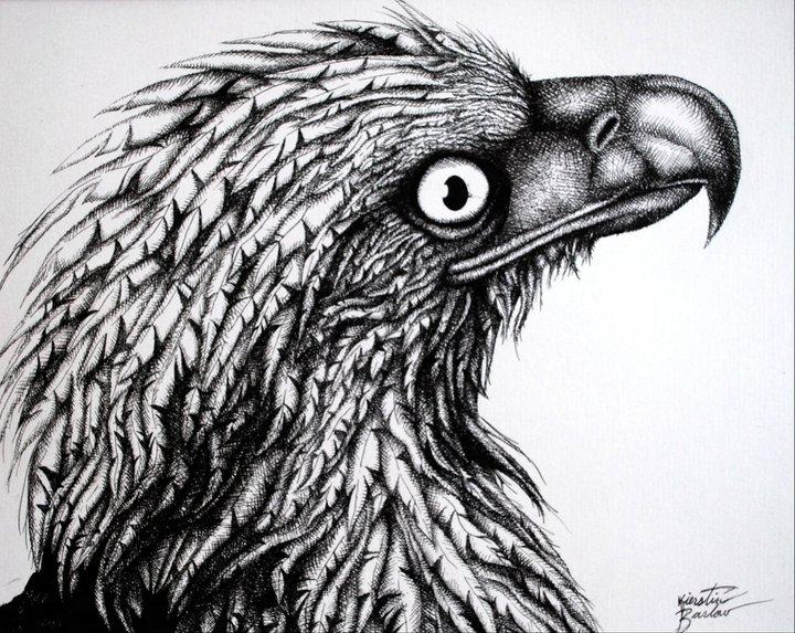 Eagle   | Pen & Ink