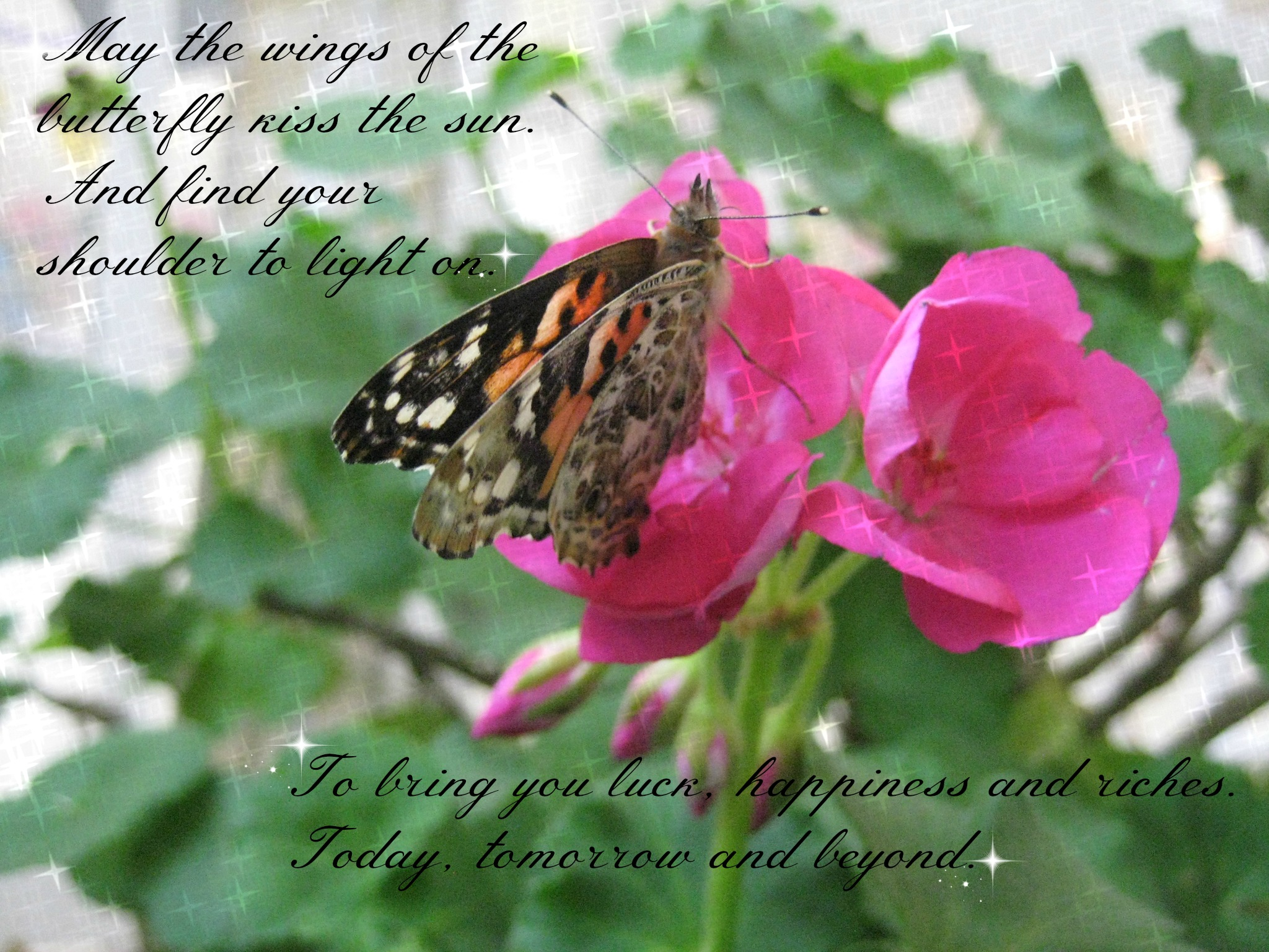 May-the-wings-of-the-butterfly-kiss-the-sun_-And-find-your-shoulder-to-light-on_-To-bring-you-luck-happiness-and-riches_-Today-tomorrow-and-beyond.jpg