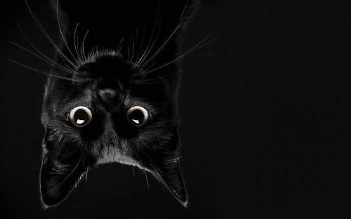 pasos de gato - Los pasos de gato vienen de la tradición teatral, pequeños pasadizos en las alturas para desplazarse desafiando el equilibrio. Y como los gatos, se hace sigilosamente, en silencio y sin miedo a las alturas.