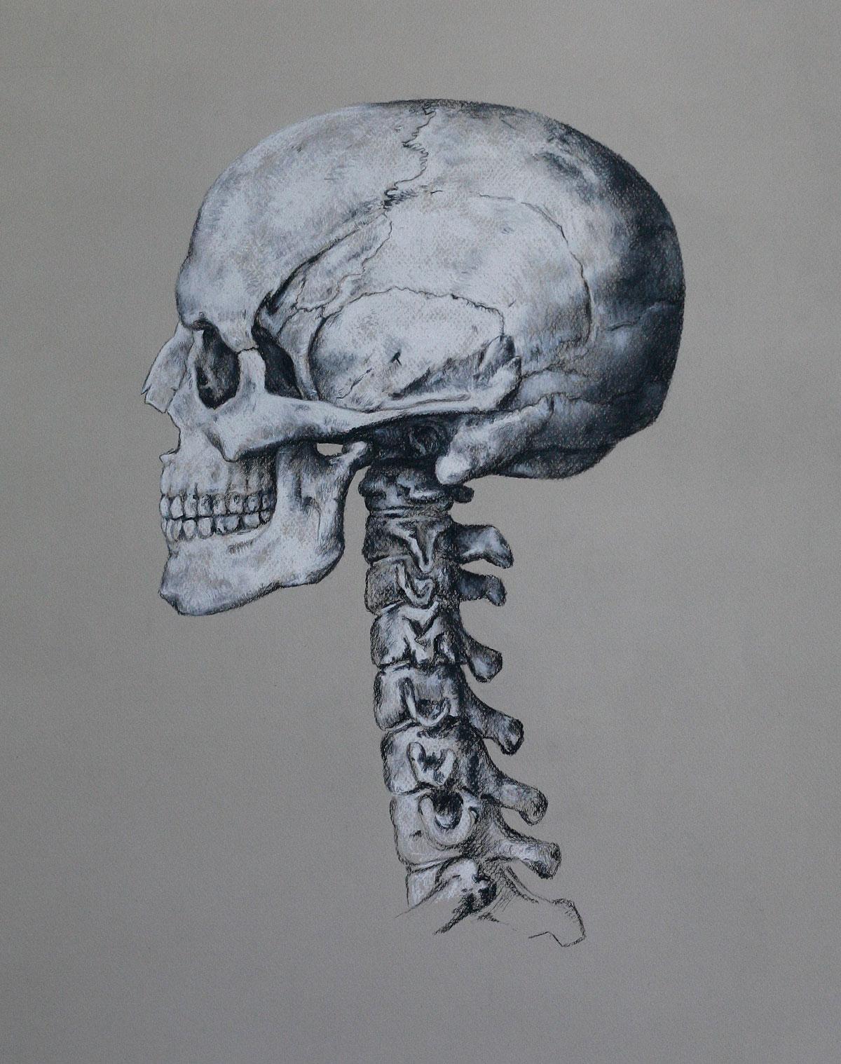 Mind and Specimen (Study no. 1)