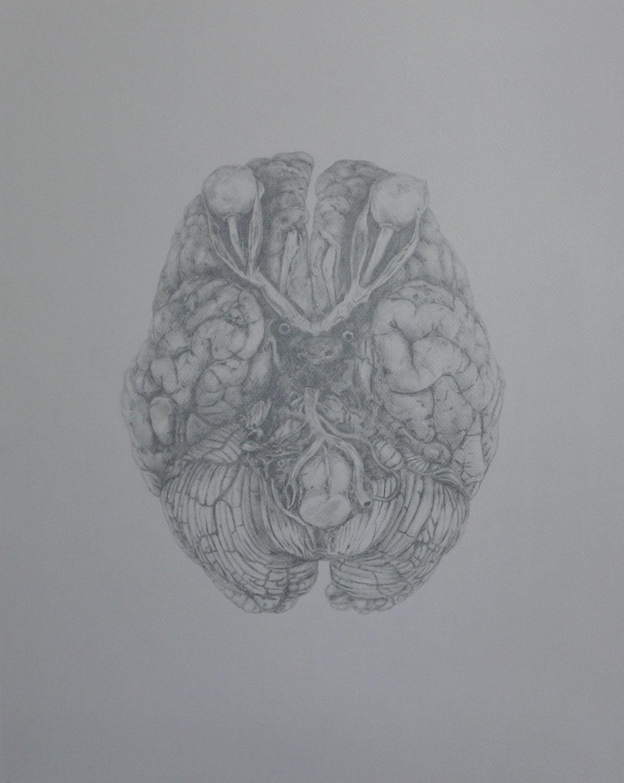 Mind and Specimen (Study no. 6)