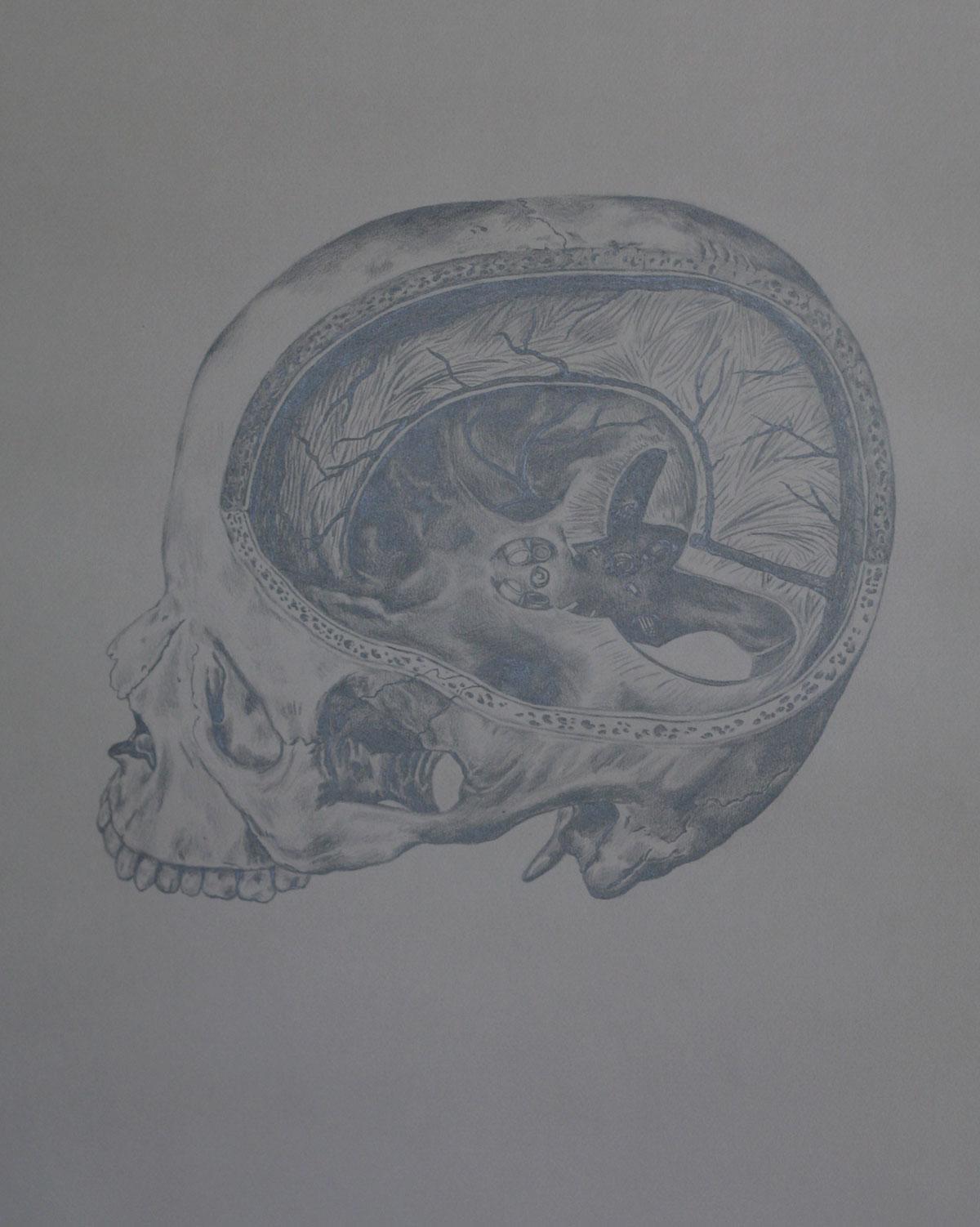 Mind and Specimen (Study no. 5)