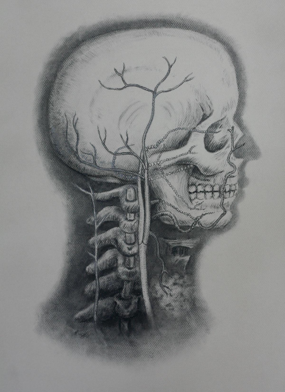 Mind and Specimen (Study no. 2)