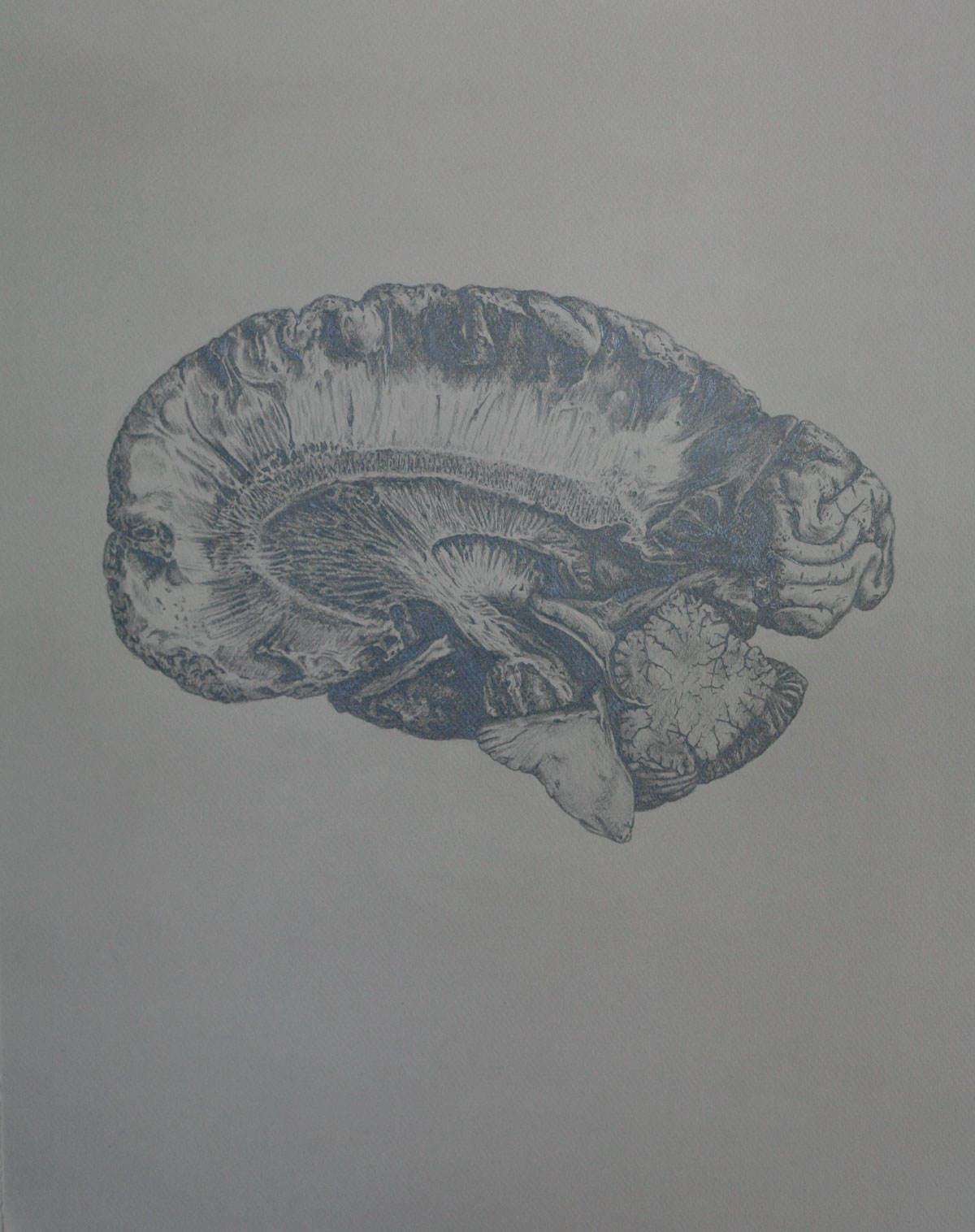 Mind and Specimen (Study no. 3)