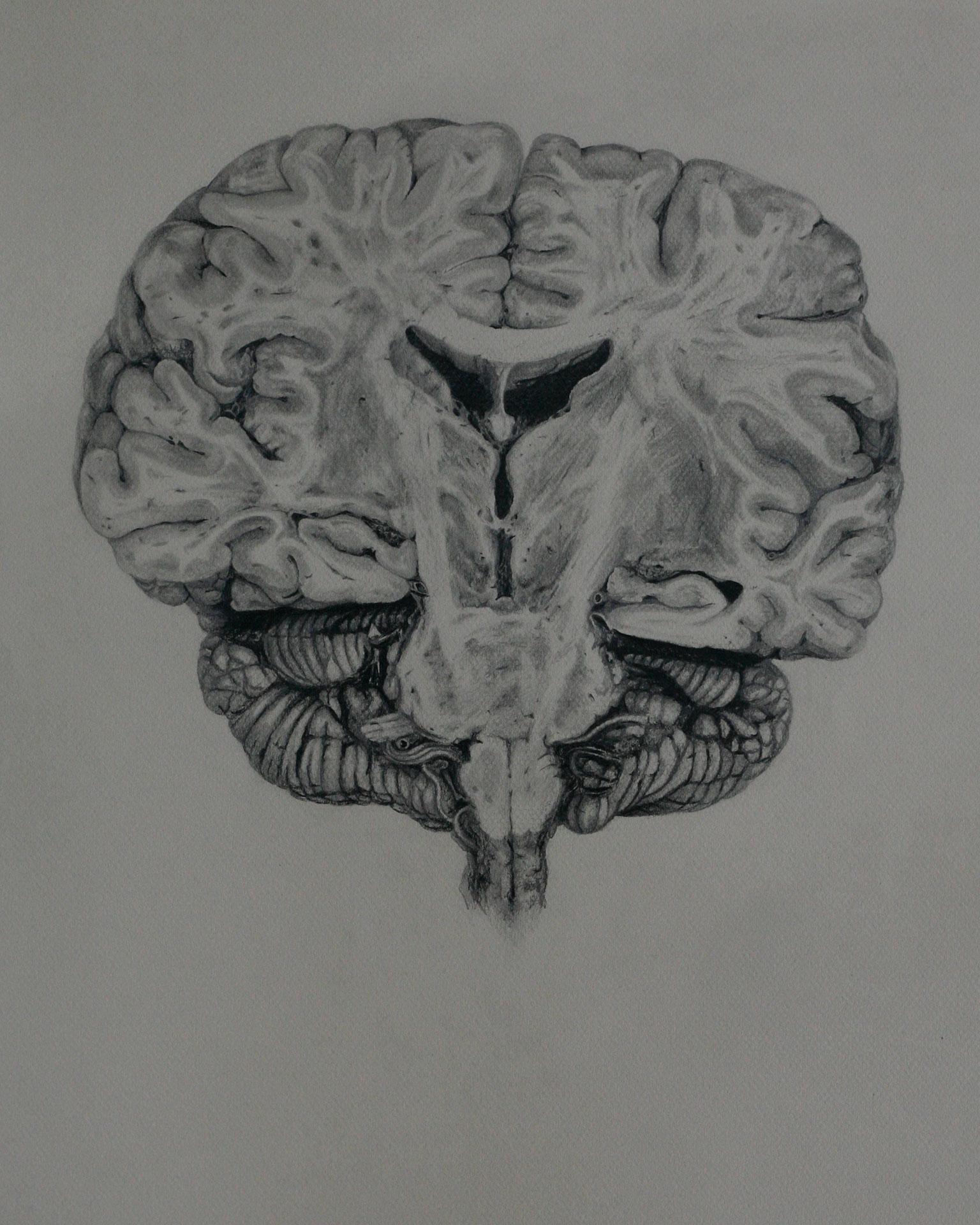 Mind and Specimen (Study no. 10)