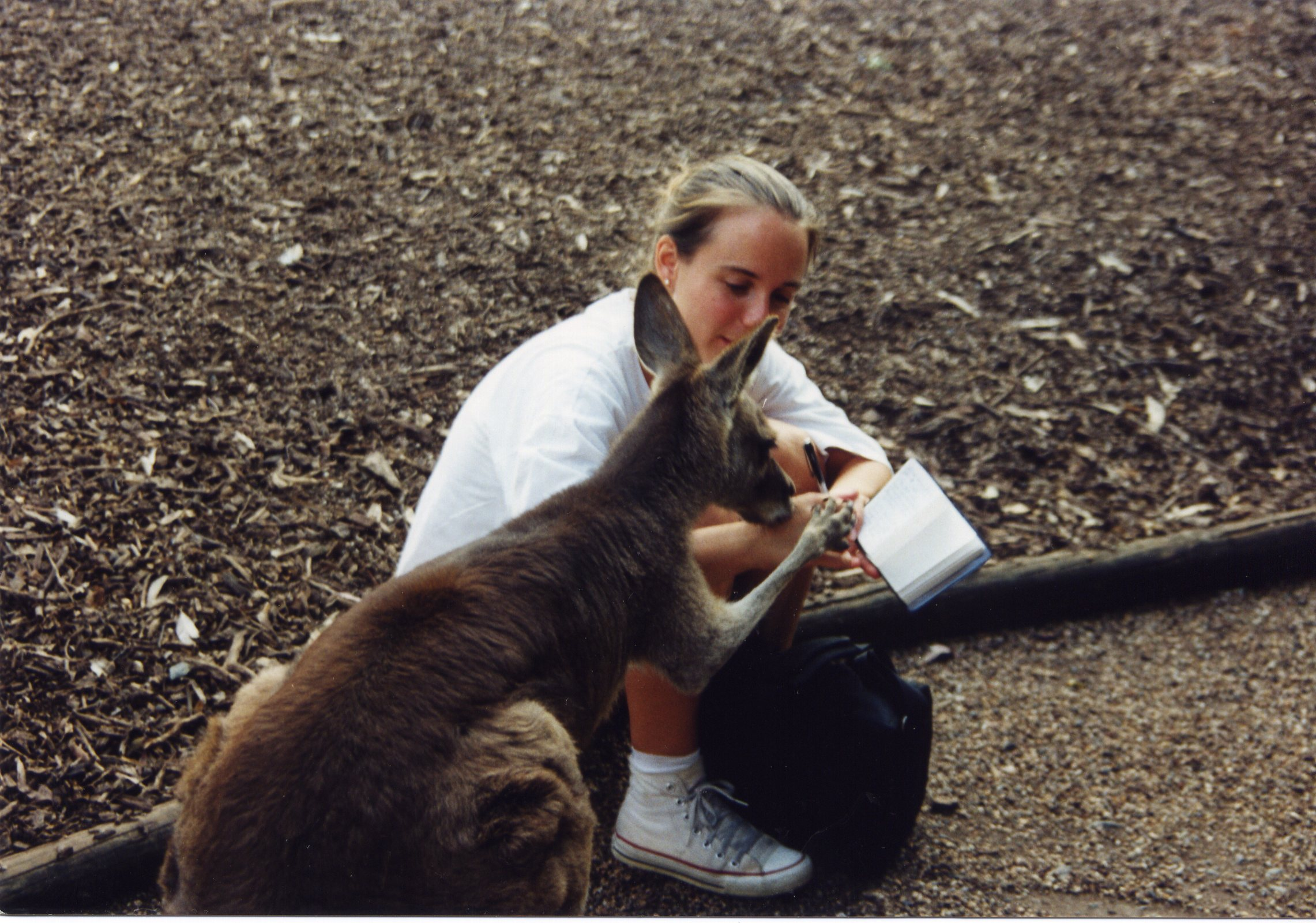 Kangaroo writing help.jpg