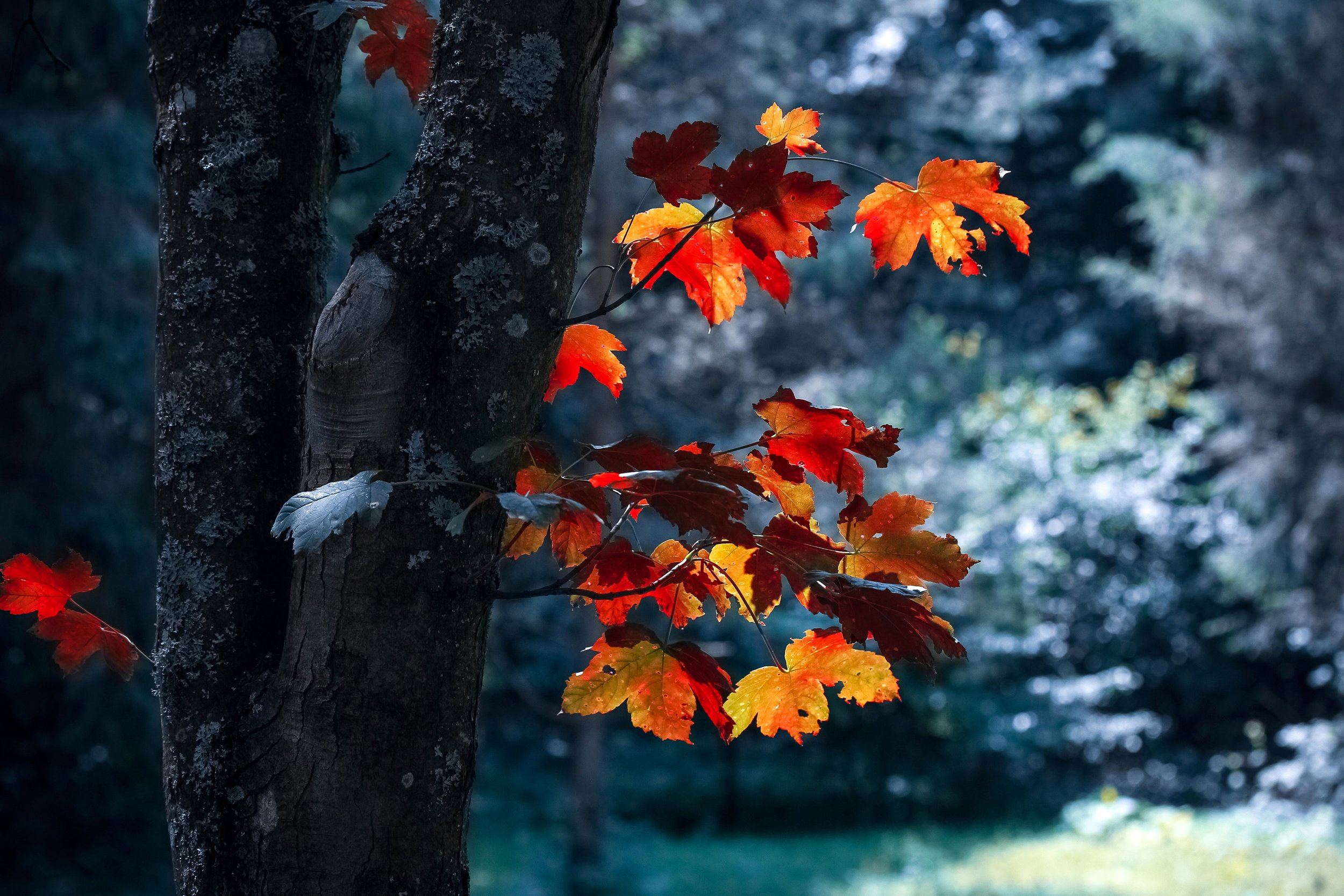 autumn-autumn-leaves-blur-589840.jpg