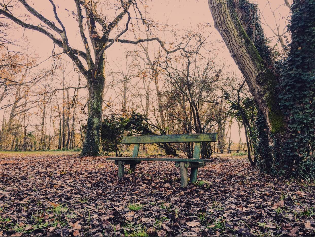 country bench in autumn