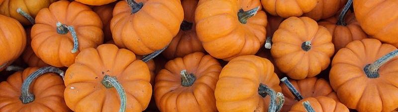 800px-Mini_pumpkins.jpg