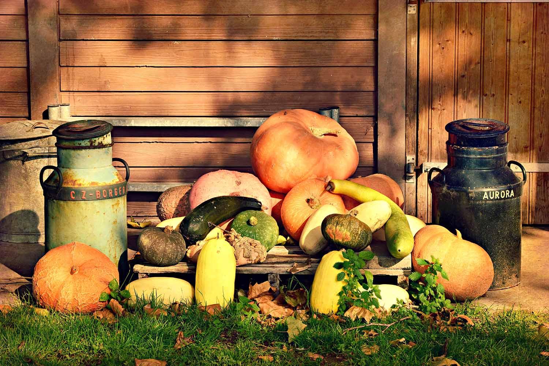 pumpkin-3775726.jpg