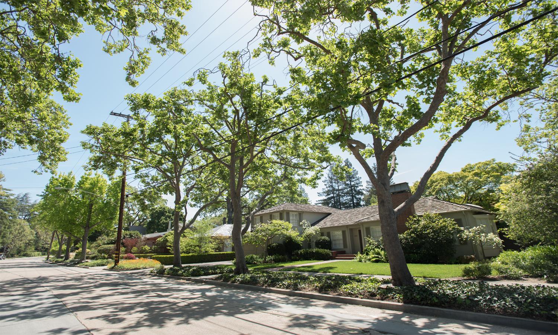 Waverly St, Palo Alto