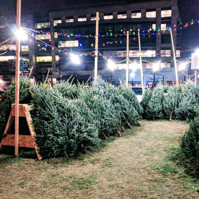 Arlington-South-Lions-Club-Christmas-Tree-Lot-2017.jpg