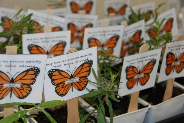 Monarch Festival Gamble Garden.jpg
