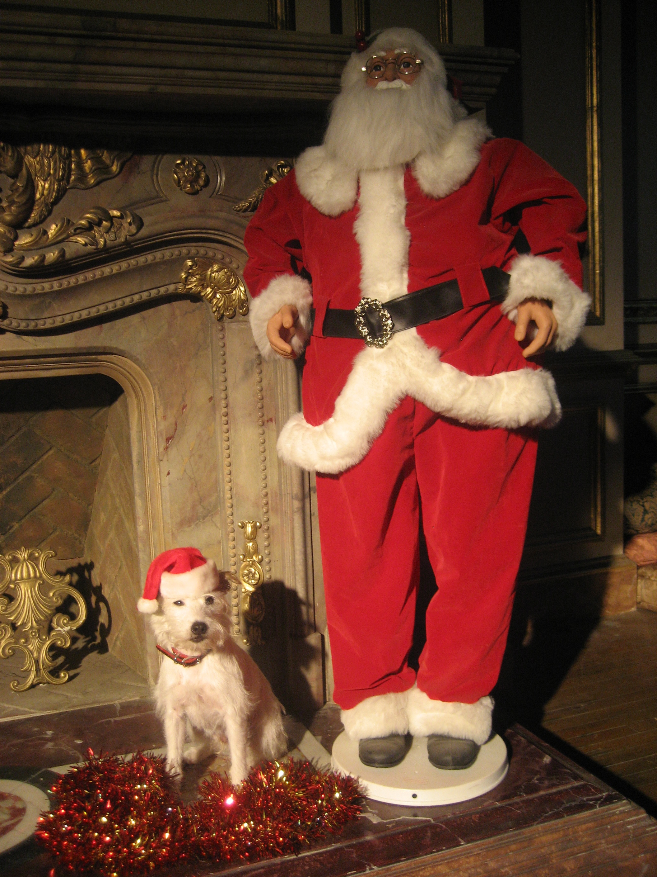 Cosmo with Santa.jpg