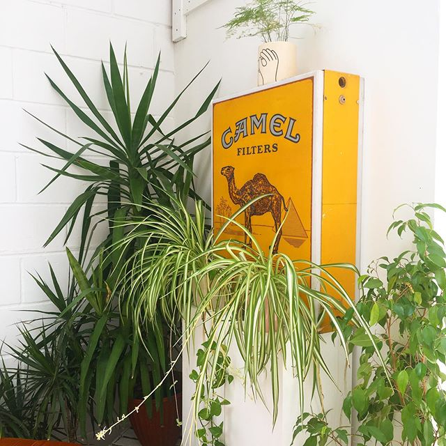🐪 🌿 ☀️ 🥜 -  @peanutfactorystudio is a daylight location studio in Hackney Wick. Info@peanutfactorystudio.com for rates and availability