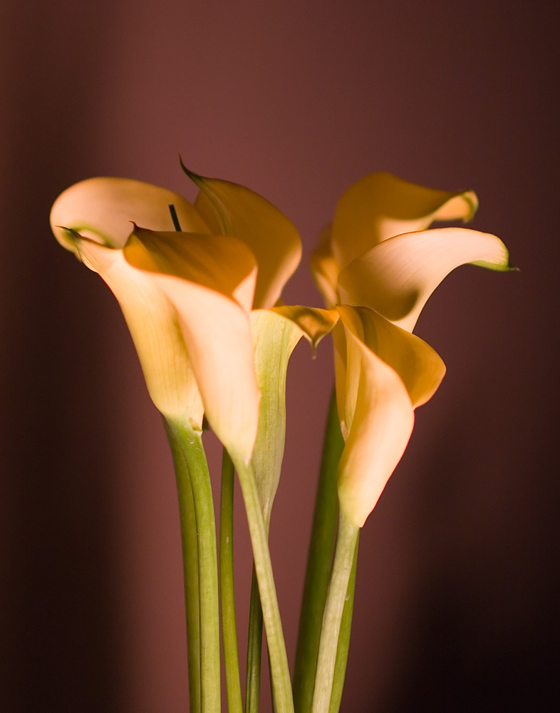 flora_9122.jpg