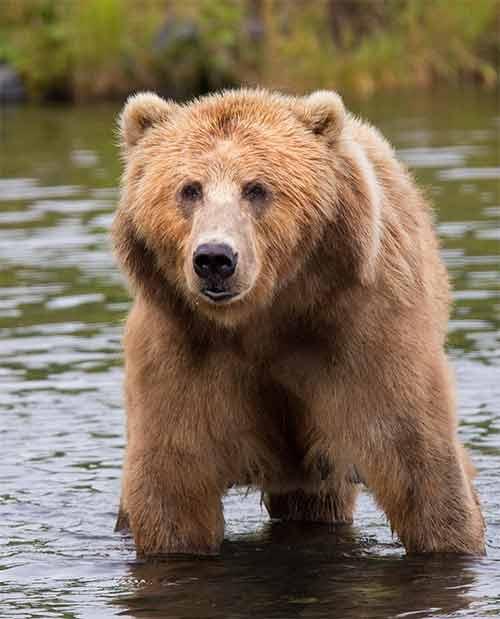 awkward-silence-grizzly-adams-bear.jpg
