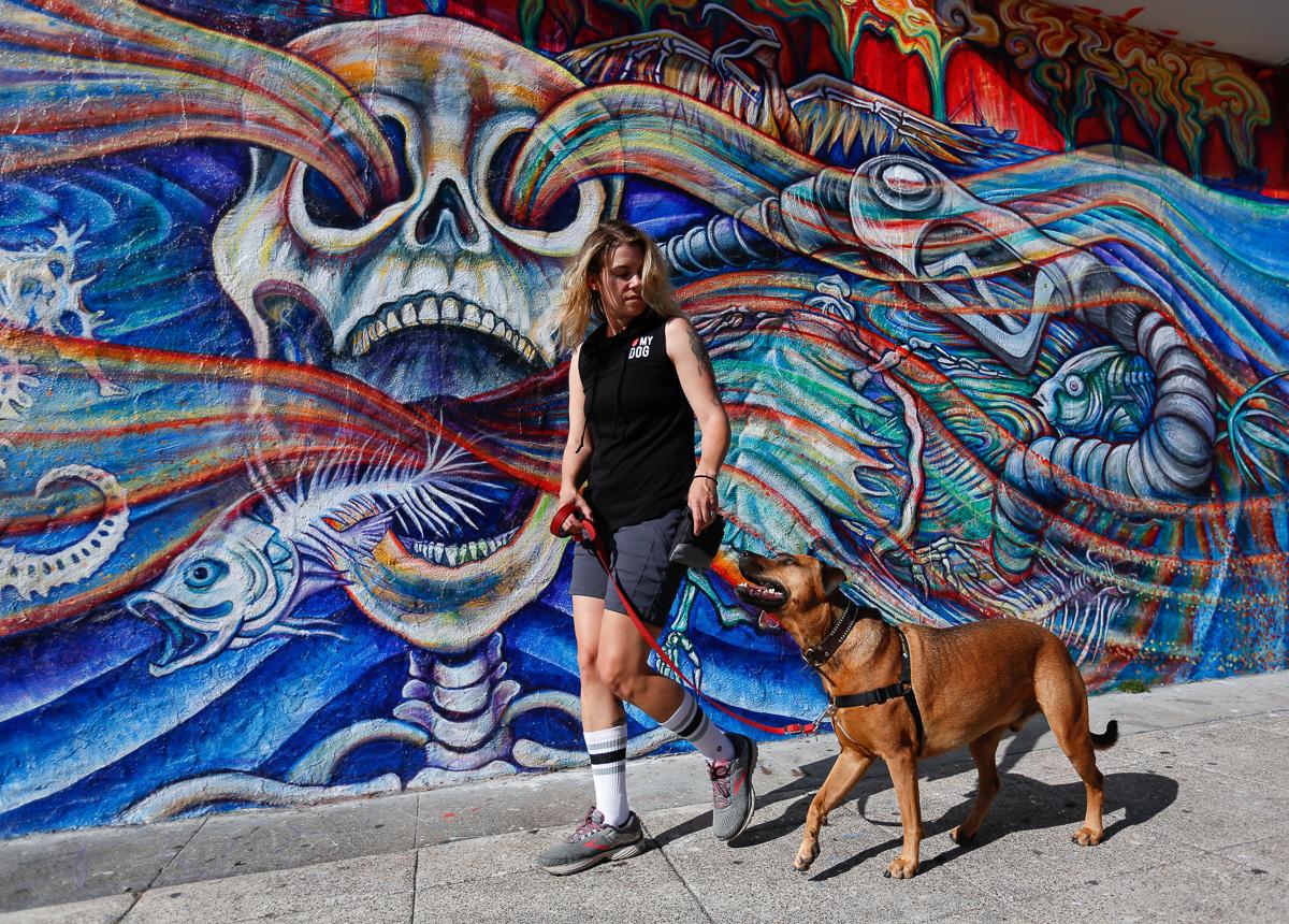 services - Neighborhood dog walks. Rewards-based, positive reinforcement training.