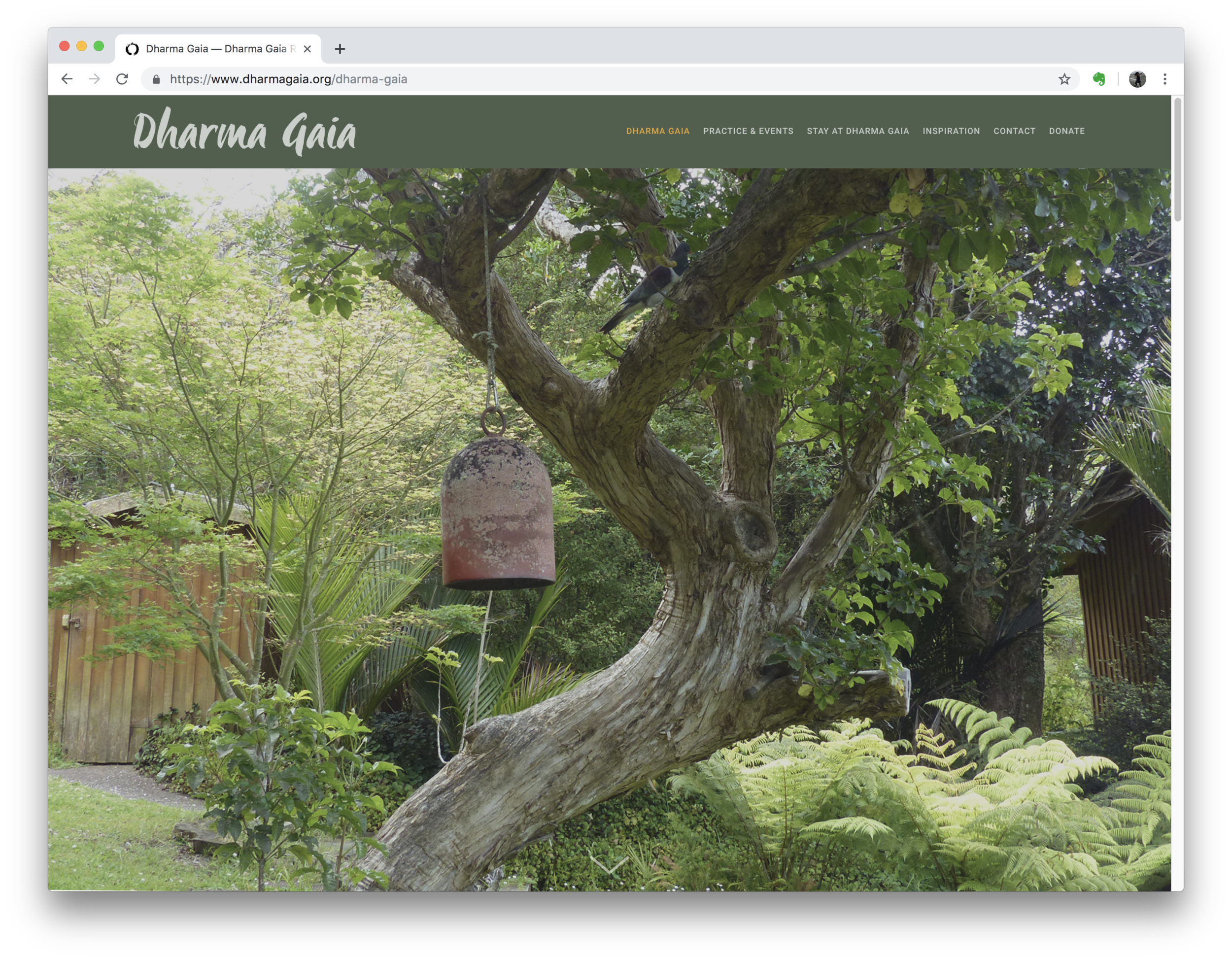Dharma Gaia Website (Squarespace)