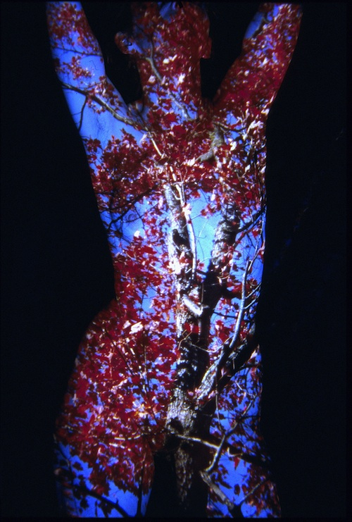 Red Tree Body 100 dpi.jpg
