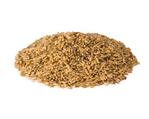 Freekeh_Whole grain.jpg