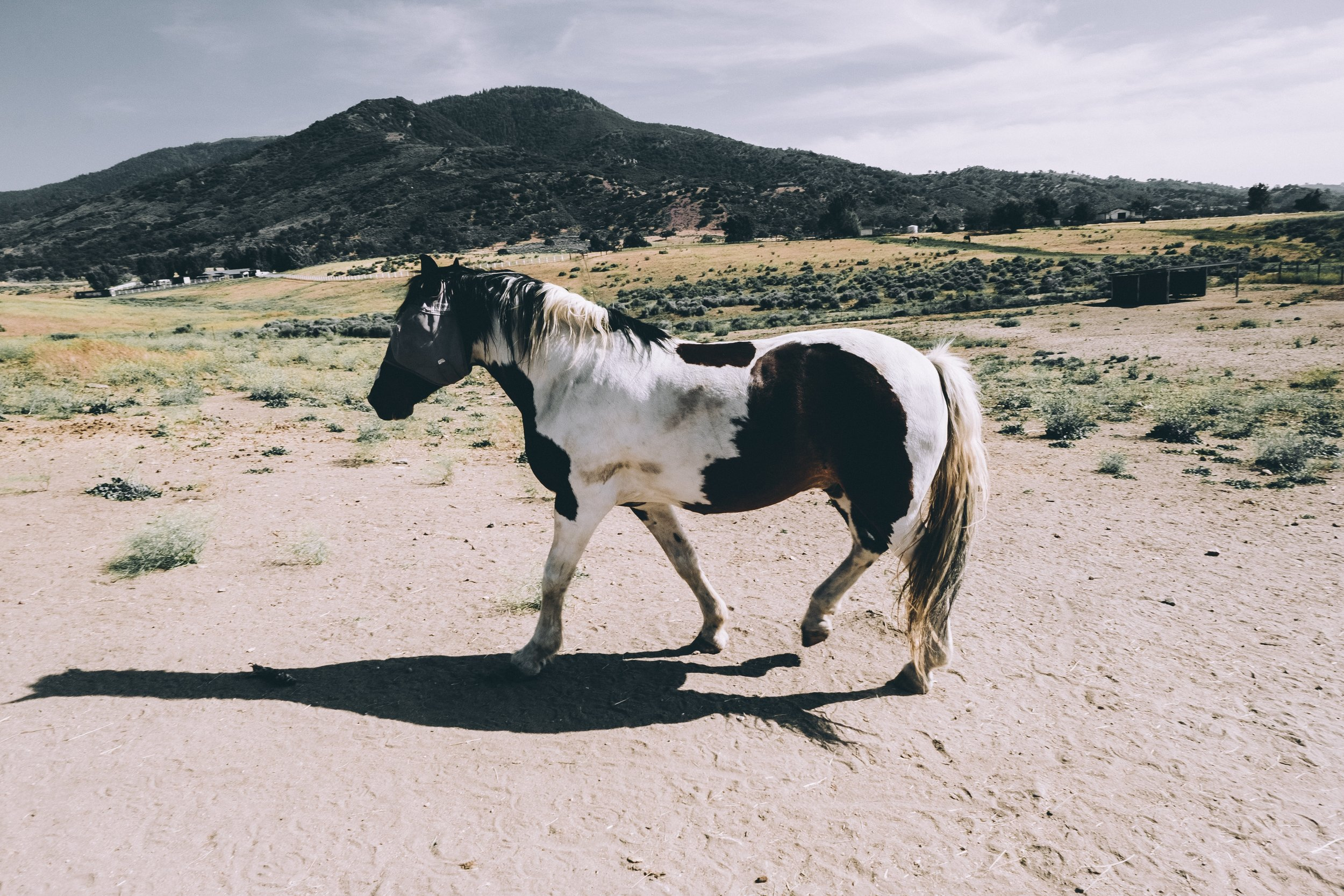 oh hey a horse