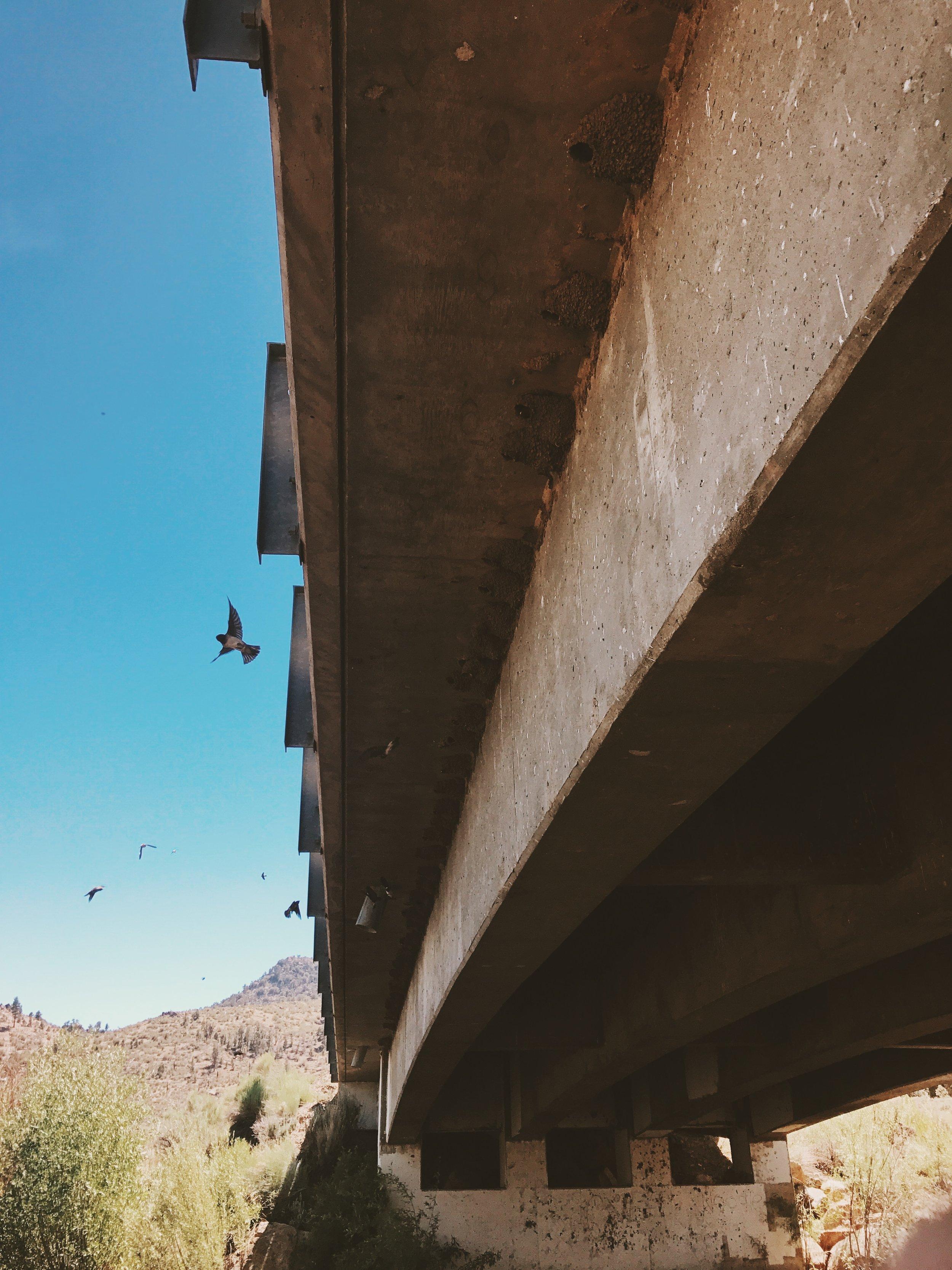 Sparrows make cool little nests under the bridge