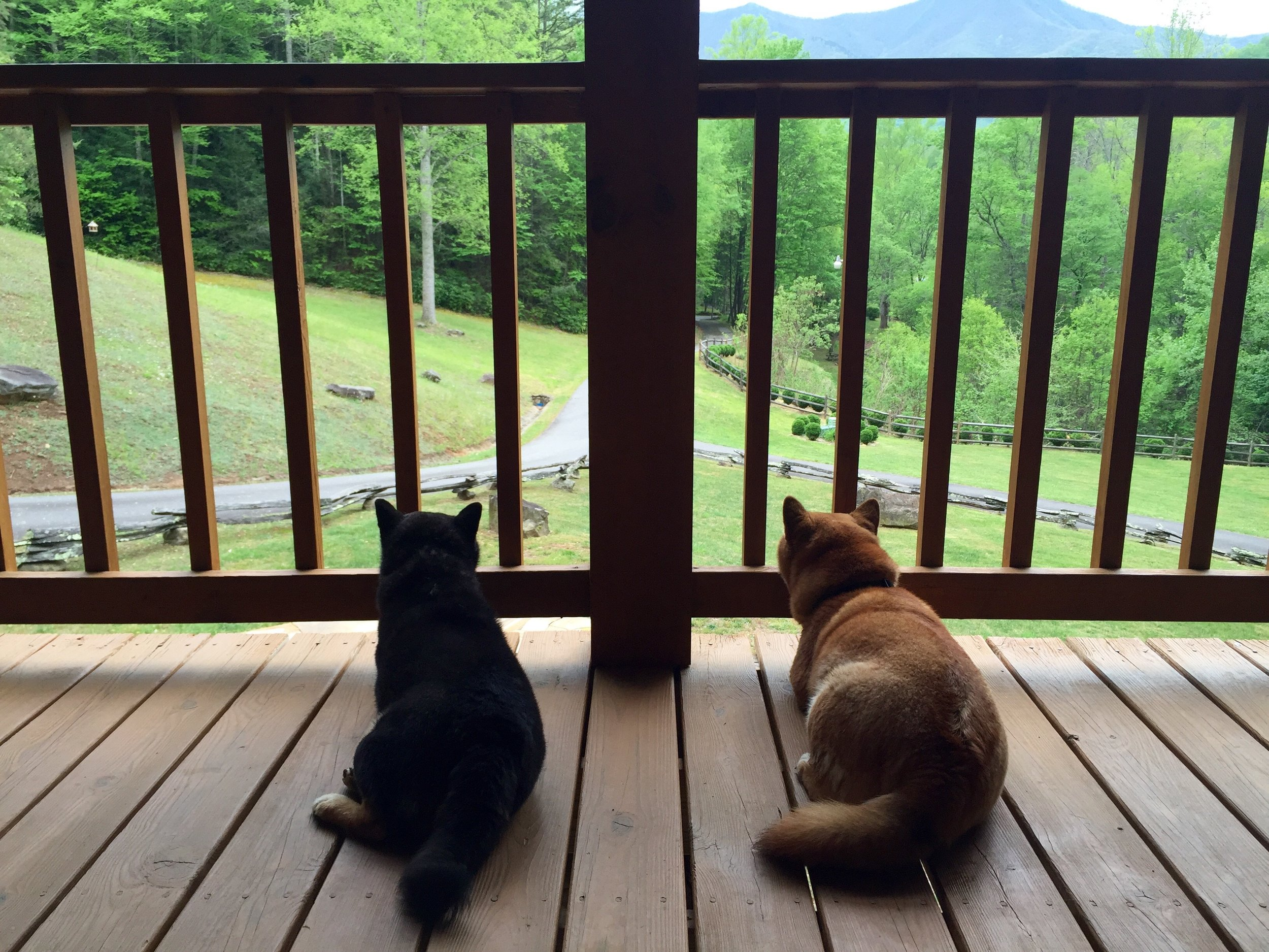 Dogs on the deck…