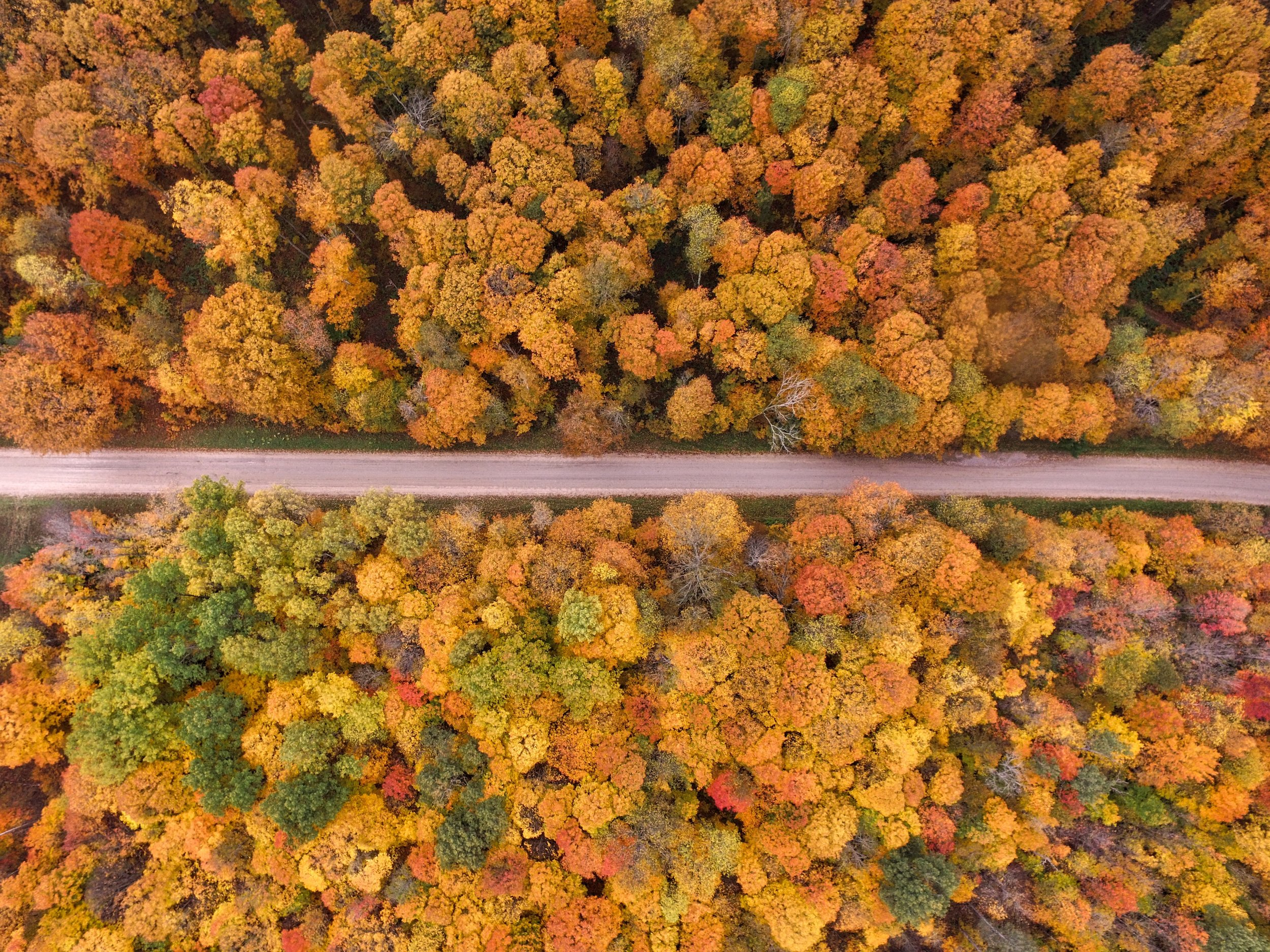 AUTUMN - UNSPLASH COLLECTION