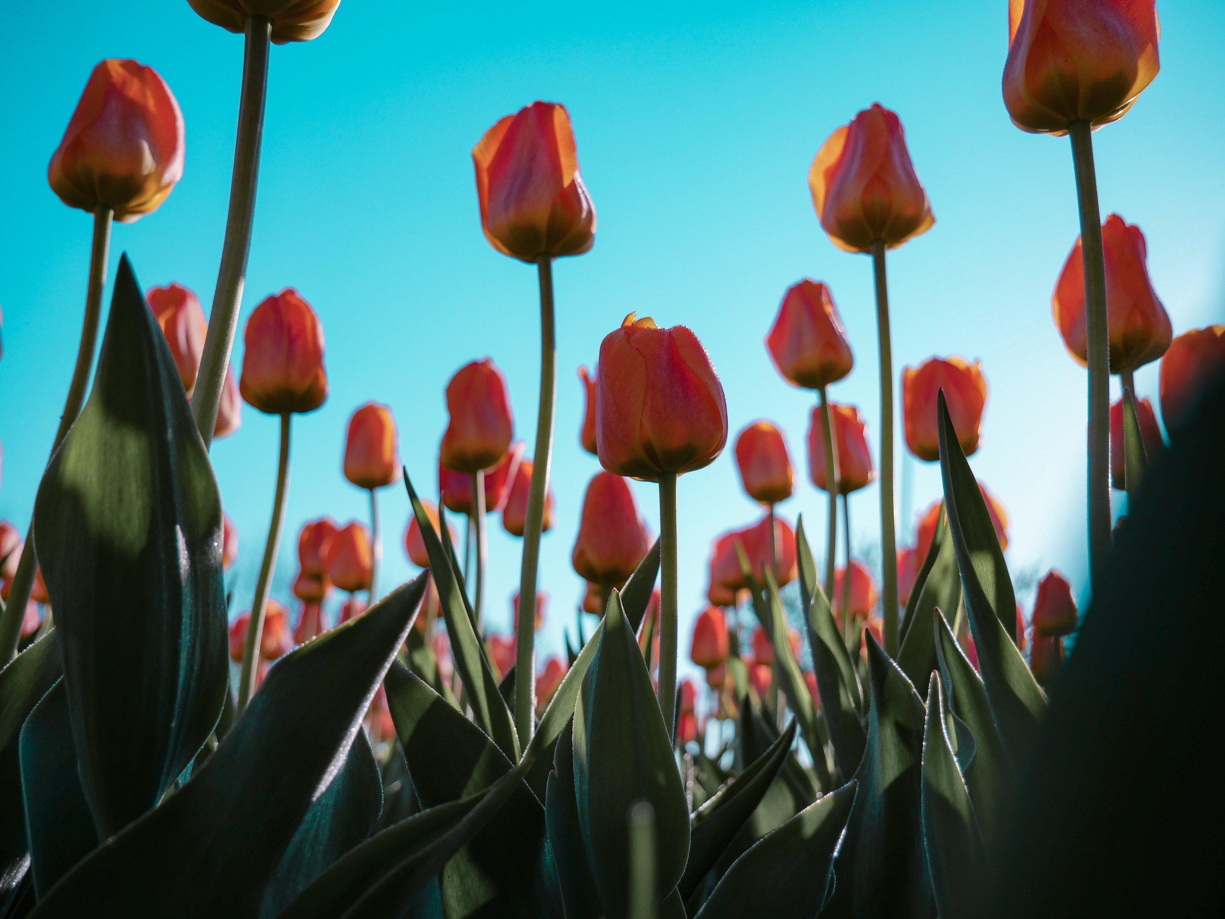 FLOWERS - UNSPLASH COLLECTION