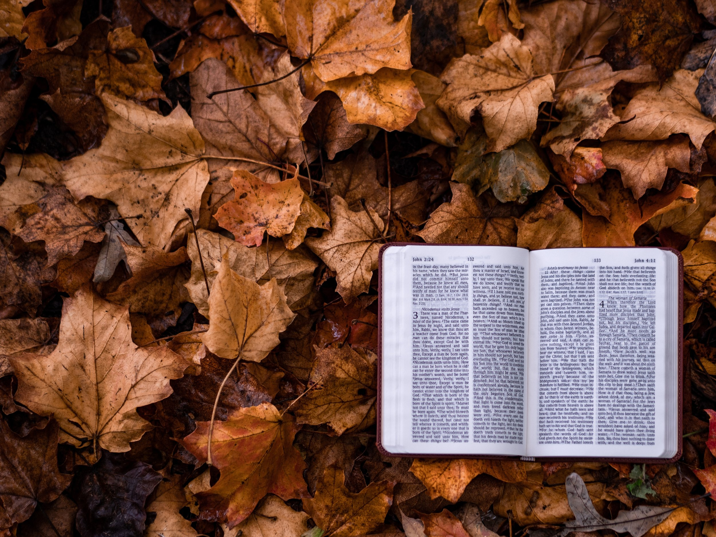 the Bible - UNSPLASH COLLECTION
