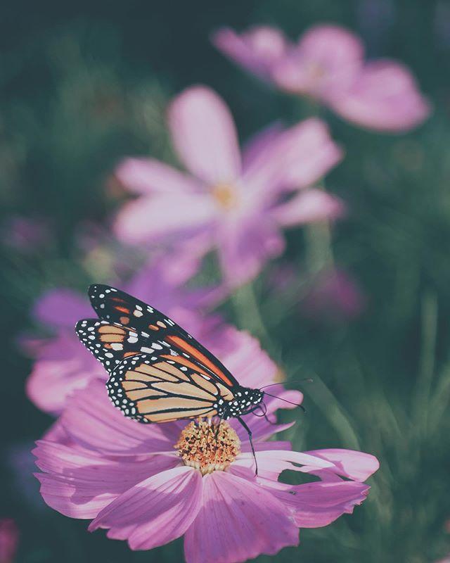 By Grace || 1 Corinthians 15:10