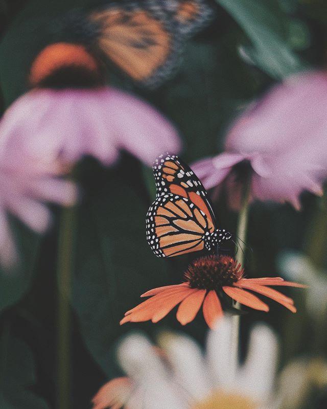 Hidden in Secret || Psalm 31:19-20