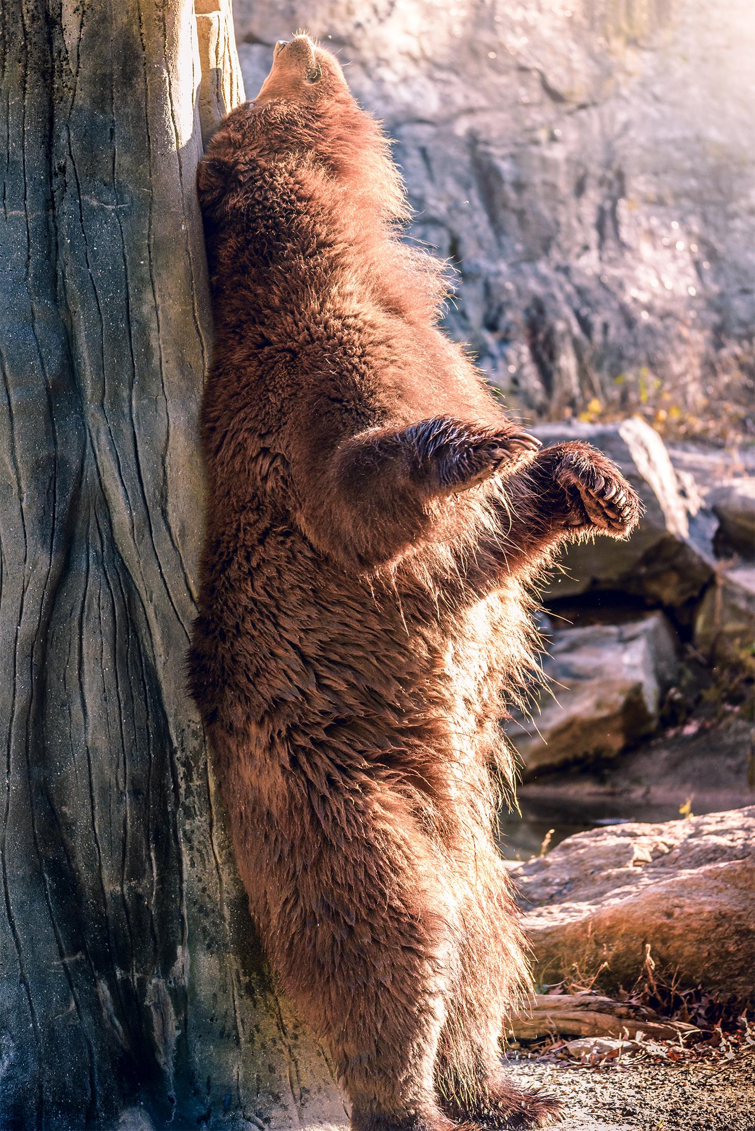 bear_BX_Zoo.jpg