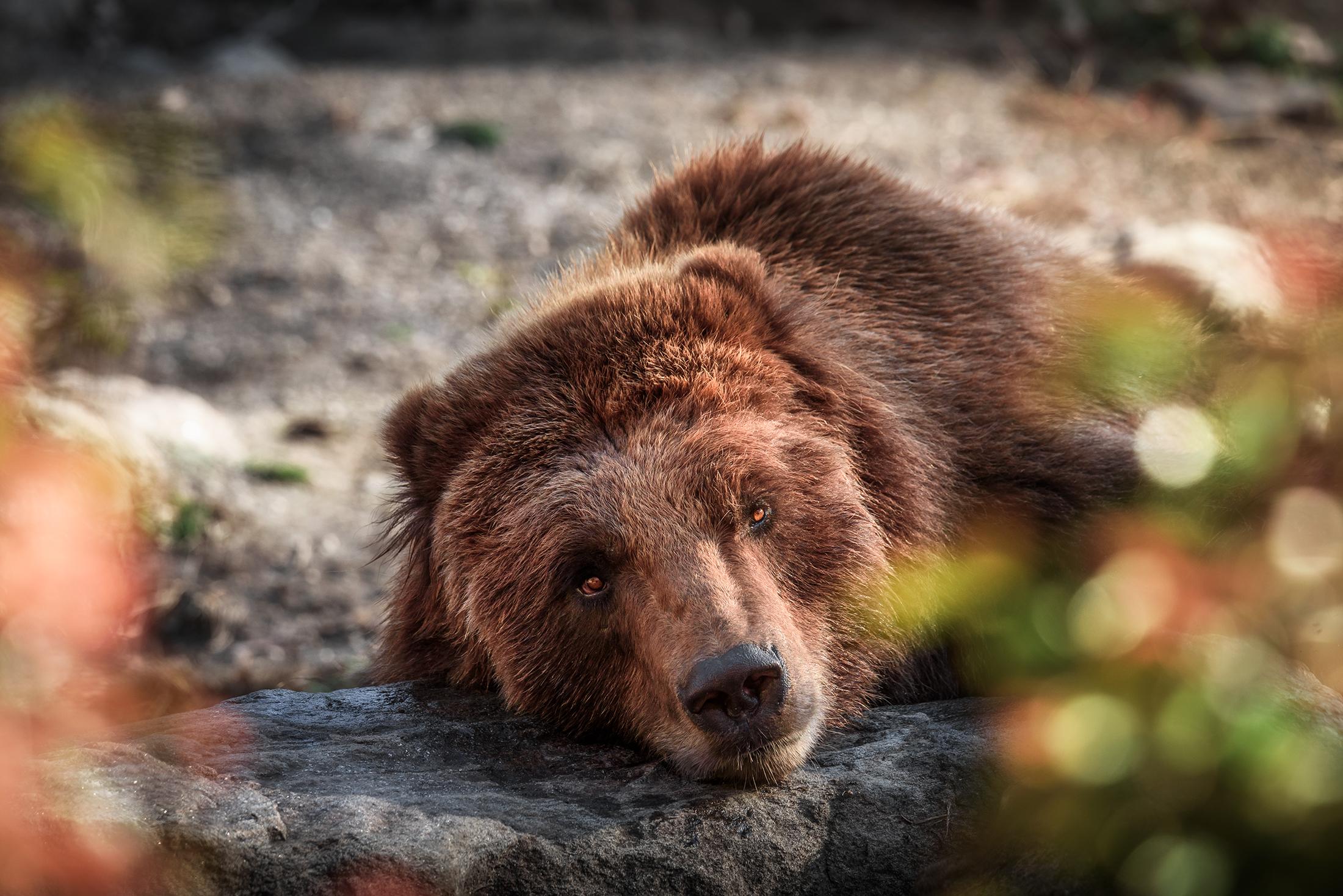 bear2_BX_Zoo.jpg