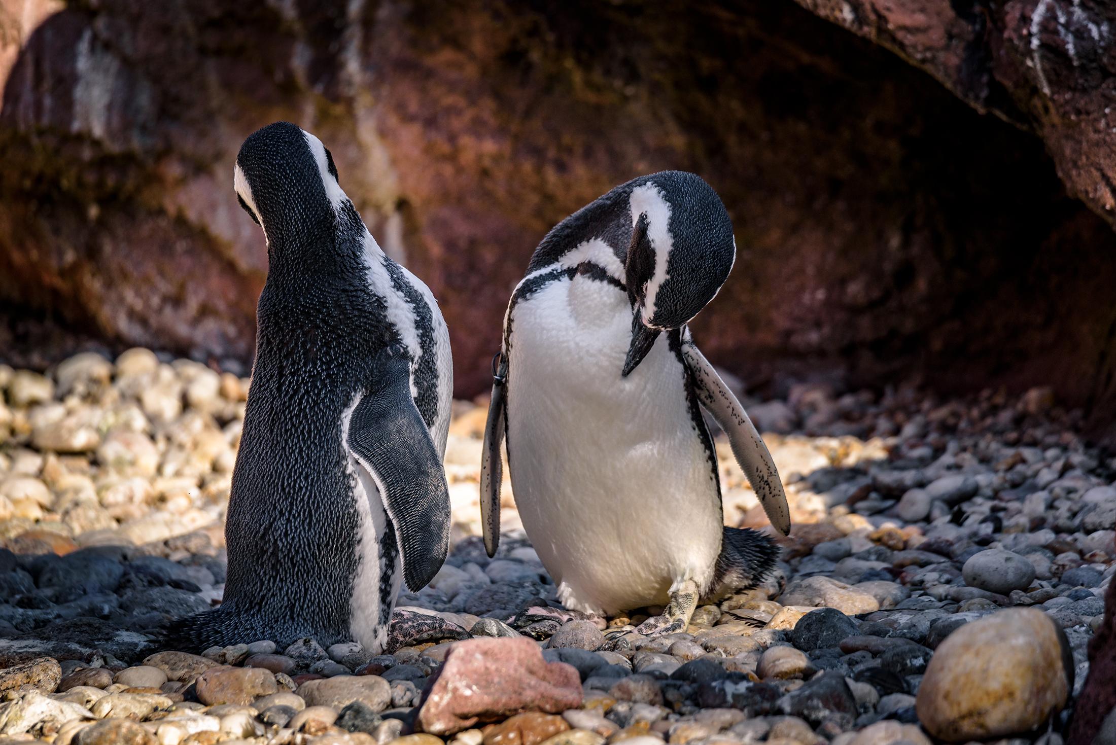 Penguins_BX_Zoo.jpg