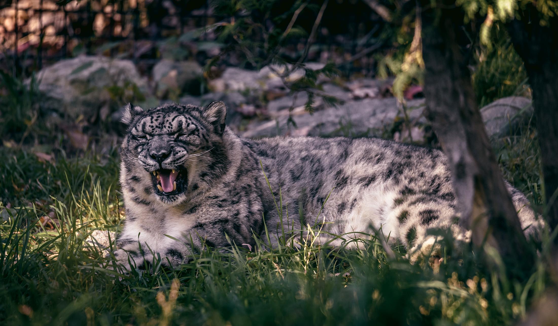 Siberian_BX_Zoo.jpg