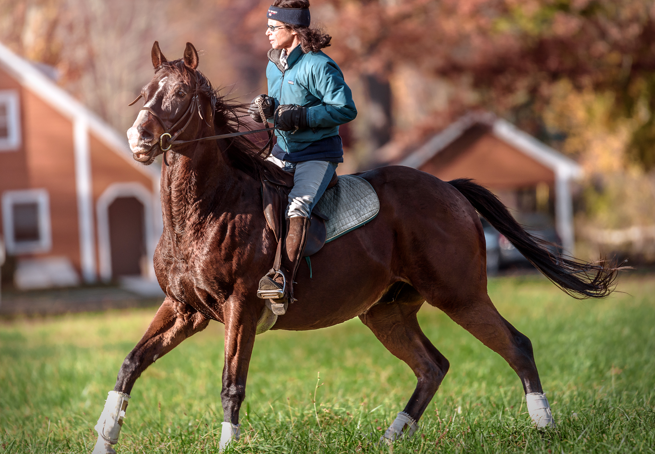 SUNY_Westbury_horse_action.jpg