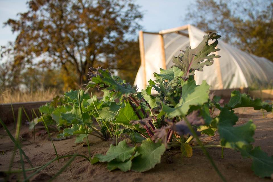 Cabbage, Lettuce, Potatoes, Flowers, and Tomatoes have all been among the crops of the gardening efforts throughout the years.