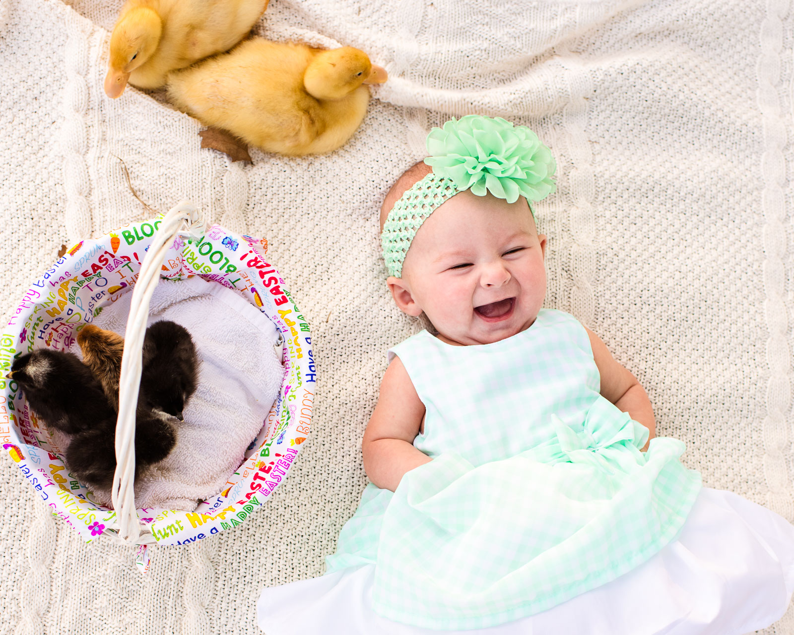 photo-sessions-baby-animals-01.jpg