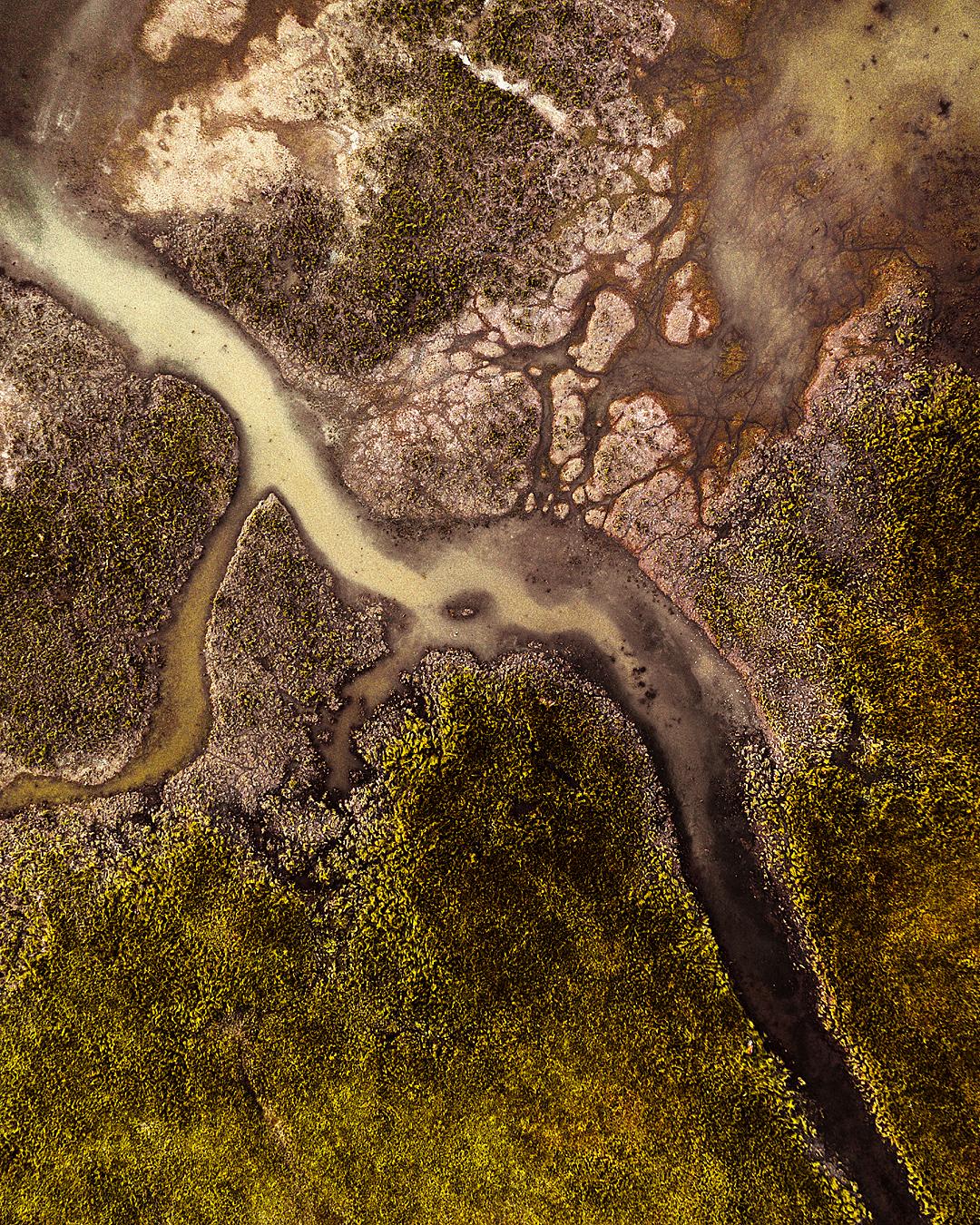 Swamps _ INSTA _ 1.png