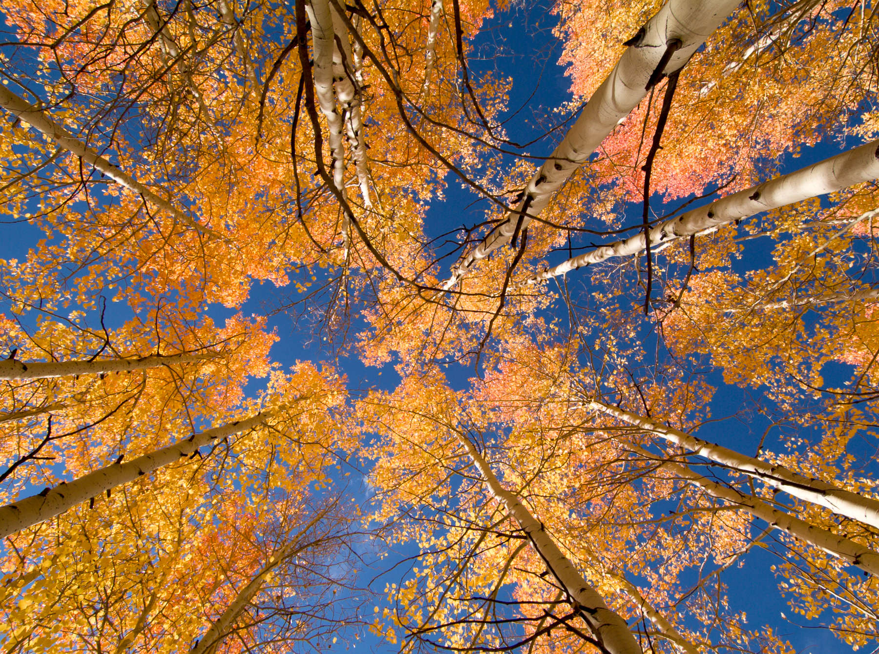 Aspen Overhead