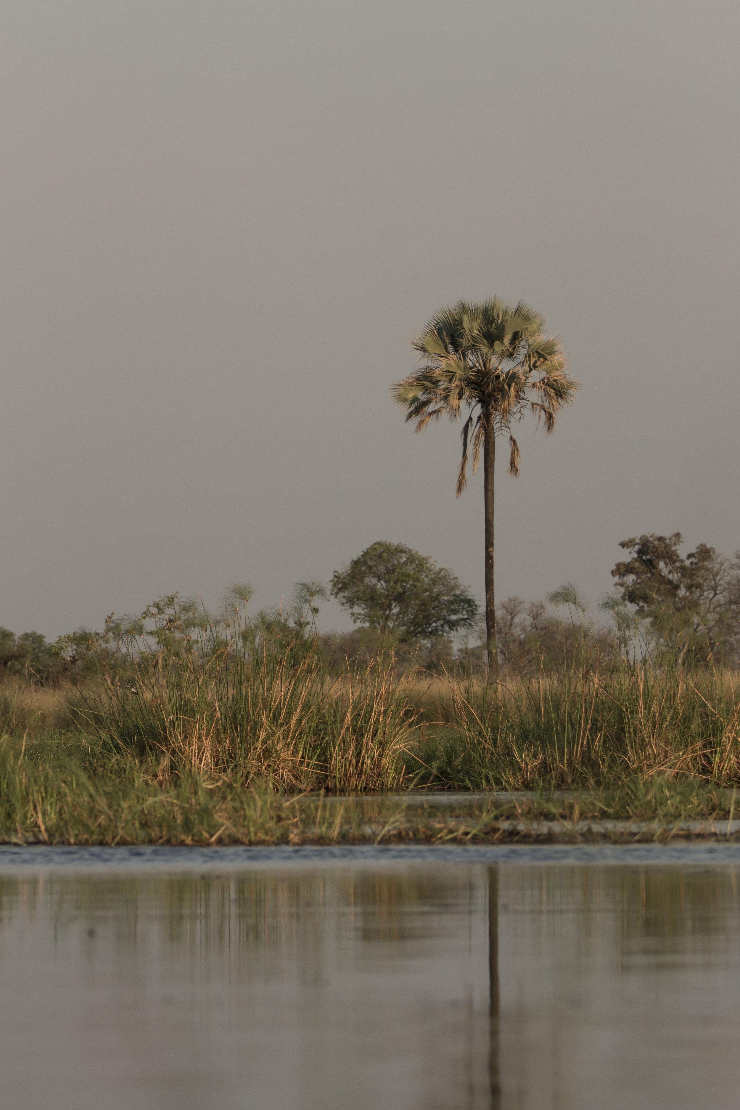 108 Botswana 166.jpg